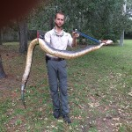 Huge Moccasin Snake Removal
