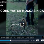 Water Moccasin Snake in St Johns County