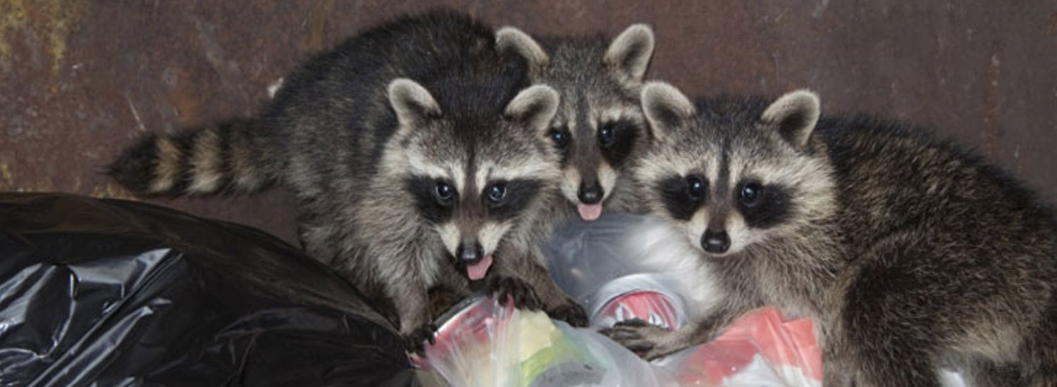 Wildlife and Animal Removal Services