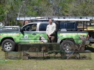 Animal Removal Service Jacksonville, Florida