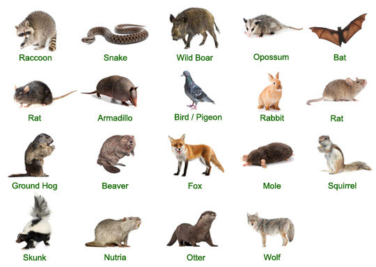 Animals We Catch
