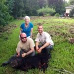 Wild Hog Catching