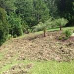 Wild Hog Yard Damage