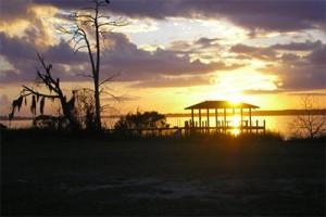 Fleming Island Animal Removal