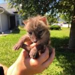 Grey Fox Rescue