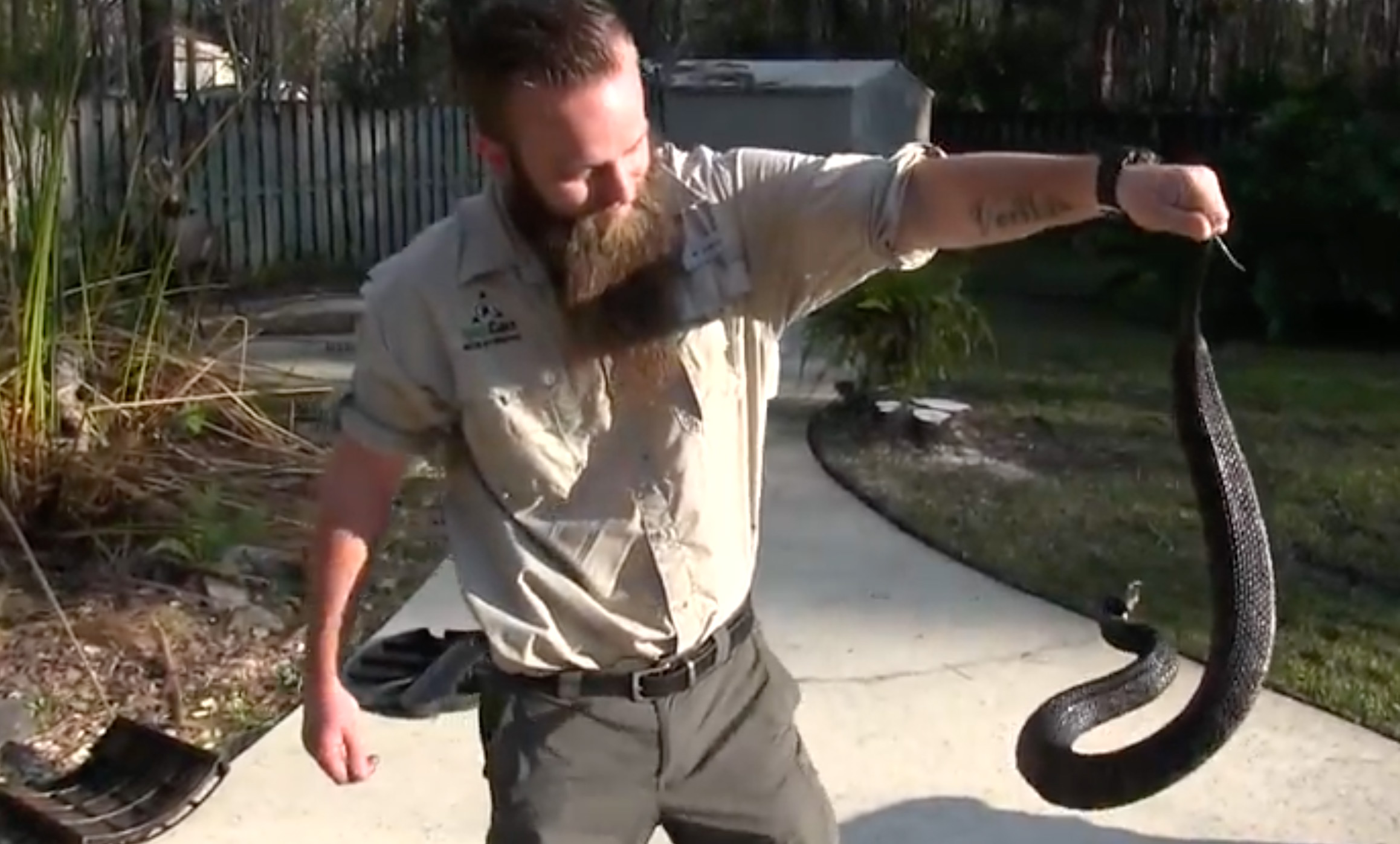 Water Snake Removal